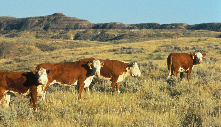 Garfield County ranchers are fighting a proposed Bureau of Land Management order that would cut a cattle grazing allotment on federal lands in half. They say it would kill their family businesses. …