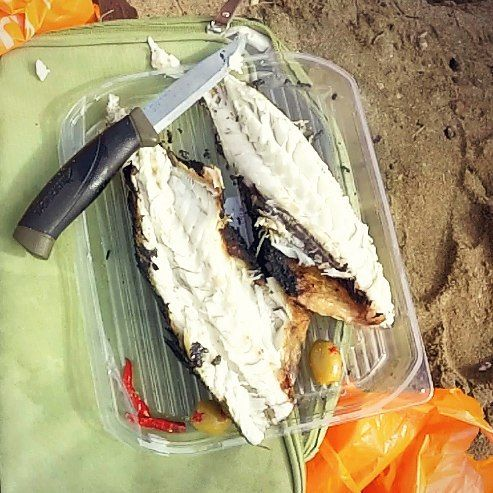Anyone for Sea Bass?   thebushcraftcave.com  #Mora #moraofsweden #seabass #bushcraft #bushcrafters #bushcraftknife #fishing #catchoftheday #explore #adventure #raymears #beargrylls #edc #survival #survivalist #hunt #hunting #prepper #morakniv