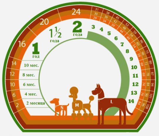 Таблицы соответствия возрастов собак, кошек и людей