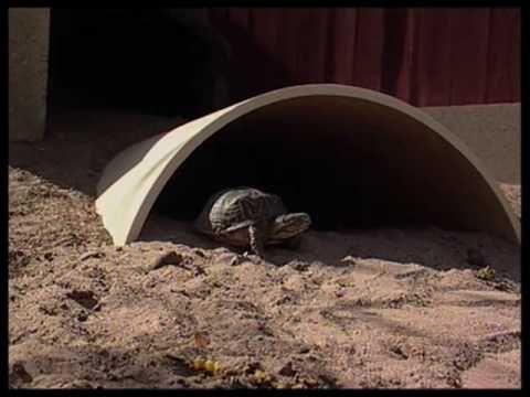 DIY tortoise shelter