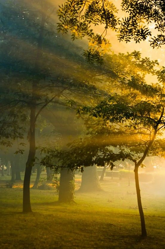 swansong-willows:Beams Of Lights, Earth Photography, Fall Landscapes Photography, Nature, Beautiful, Lights Ray, Yellow Leaves, Sun Rays, Yellow Lights