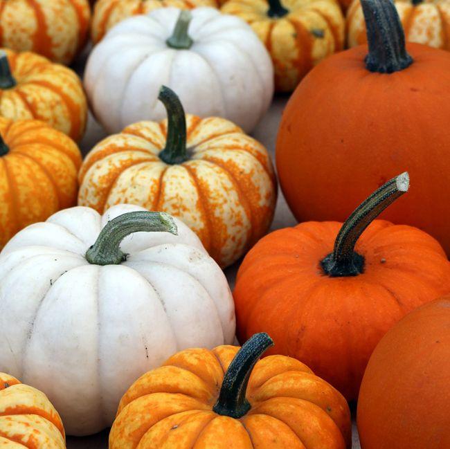 multicolored pumpkins