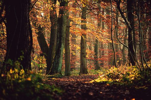 THE MAGIC FARAWAY TREE: North Yorkshire, Primev Forests, Enchanted Forests, Autumn Fall, Autumn Forests, Beautiful Places, Exotic Places, Skipton Wood, Perfect Forests