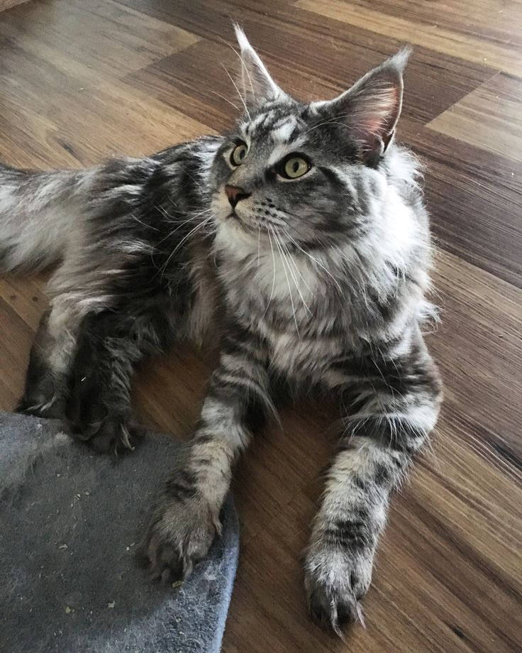 Best Cat Name Tum