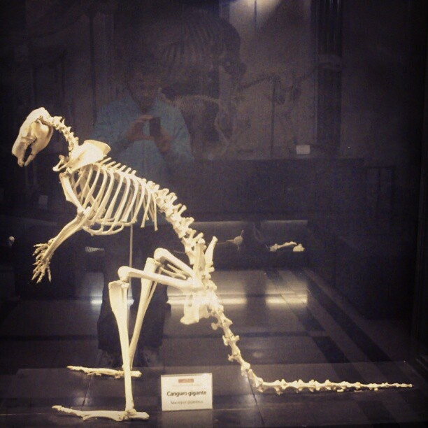 Me & a kangaroo skeleton - @ibbanez- #webstagram