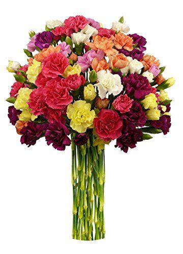 20 stem Rainbow Mini Carnations, No Vase - http ...