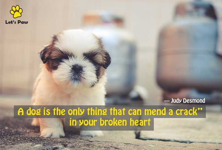 A dog is the only thing that can mend a crack in your broken heart. —Judy Desmond
