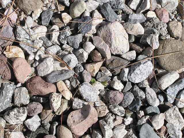 Gravel and stone forms a clean-looking mulch material. It is ideal for cactus and succulent plants that need good drainage.