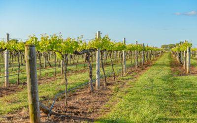 Che cos'è il vino biodinamico e cosa lo differenzia dal vino biologico. Per qualcuno è una semplice moda, per altri una precisa filosofia. Vediamo...