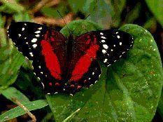 Arthropods – Arthropods – # Arthropods – # Arthropods  – Abigaíl Vera