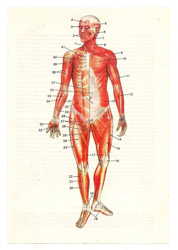 45 best Vintage Medical Charts Prints images on Pinterest Human - medical charts