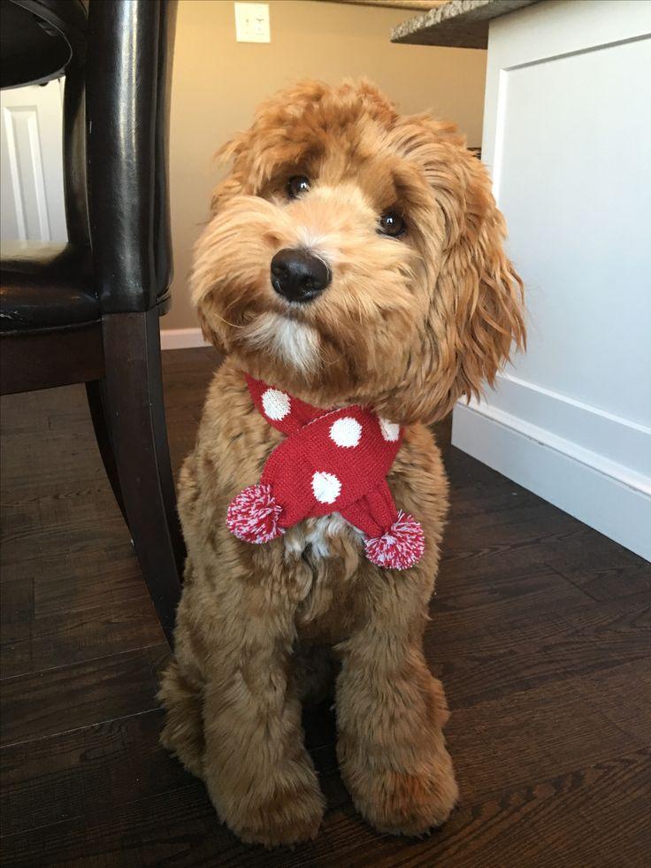 Dog Grooming Paris Ontario