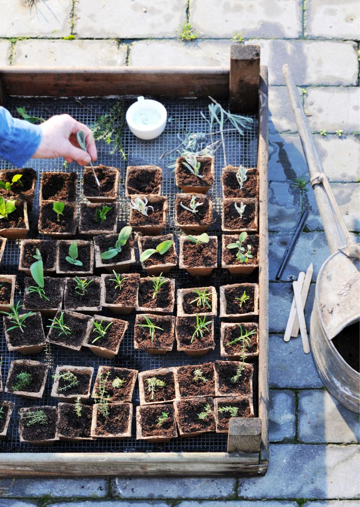 Zelf planten stekken lijkt ingewikkeld, maar is het niet. Pak een scherp mes, lege flesjes, een schaar en begin!
