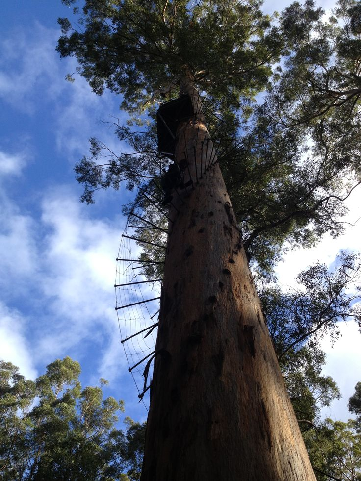 Bicentennial Tree - just 3kms down the road