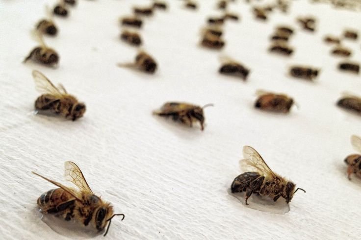 THE GUARDIAN - Artist uses dead bees to create mathematical patterns (Wired UK)