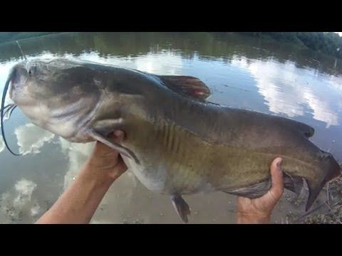 Catfish farming, Tilapia Farming and Small Business Ideas. Fish pond construction catfish feed and fingerlings.