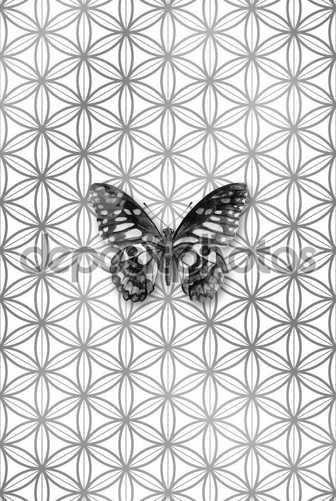 Gri tonlamalı bir çiçek deseninin hayat, kutsal geometri sembolü suluboya kelebeği - Stok İmaj #95698116