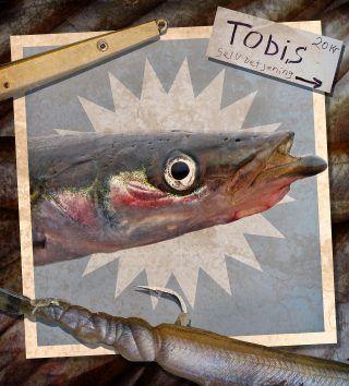 Top-Köder für viele Meeresfische: der Sandaal | Great bait for lots of seafish: sandeels