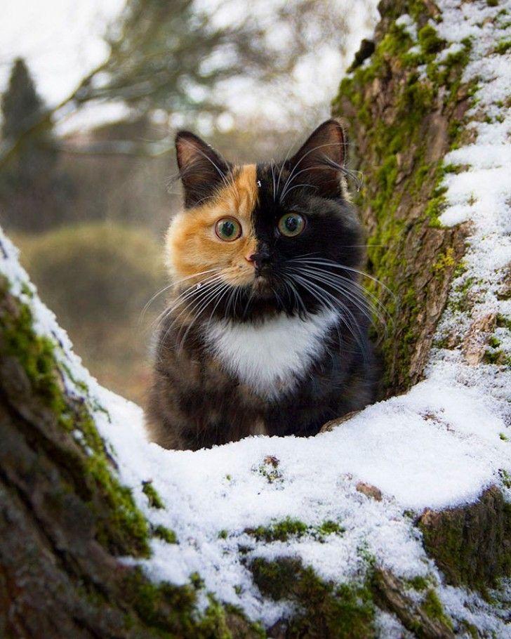 Yana, het lieve katje met de onschuldige snoet heeft twee verschillendekleuren! Ze lijkt op haar vader en moeder.