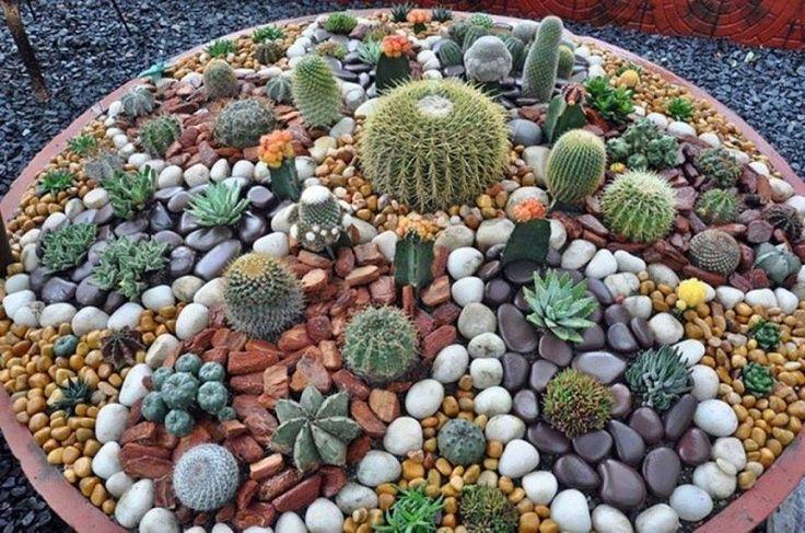 Mini jard n de cactus y piedras paisajismo piedras gaby for Cactus de exterior