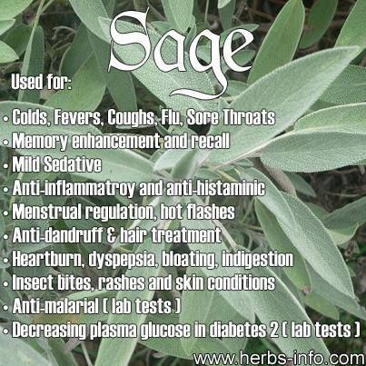 stops bleeding of wounds and cleans ulcers and sores.   sage juice in warm water helps hoarseness and cough. sage tea is used to sooth mouth, throat and gum inflammations.  This is because sage has excellent antibacterial and astringent properties.