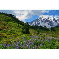 [フリー画像素材] 風景, 自然, 山, 丘, レーニア山, アメリカ, ワシントン州 ID:201310031600