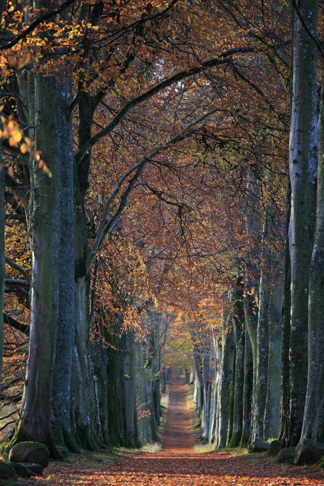 Before and After 7 Landscapes Totally Transformed By Fall NATURE