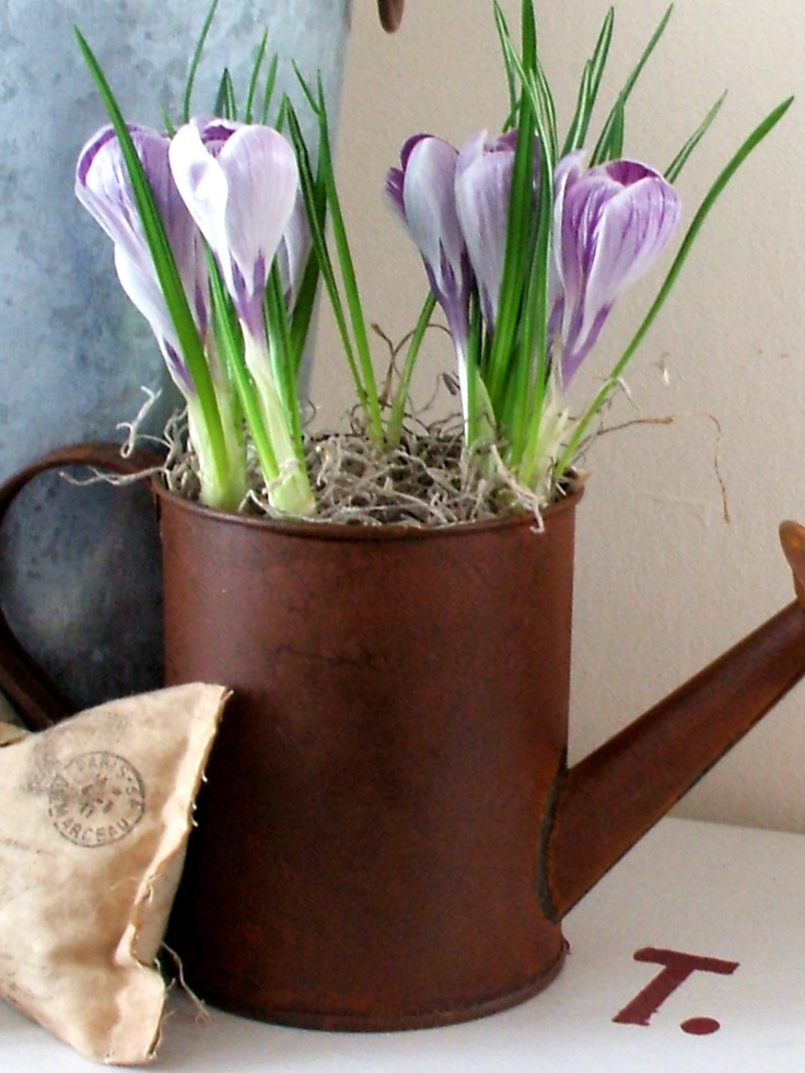 Growing Home: Forcing Bulbs Indoors