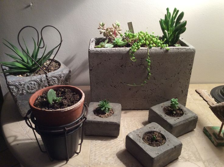 Mes succulentes