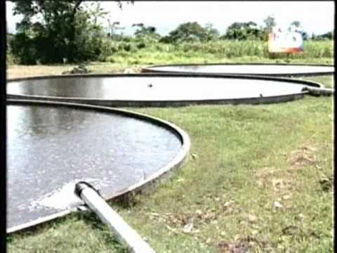 25 belas ideias de tanques de piscicultura no pinterest for Tanques circulares para acuicultura