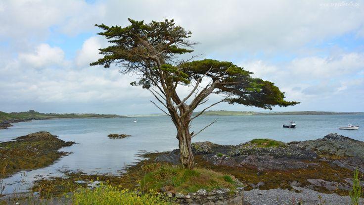 Irlandia, Wybrzeże, Kamienie, Drzewo, Morze, Statki
