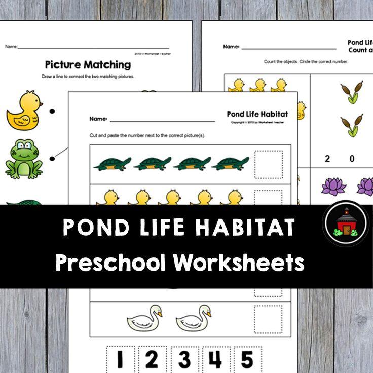 Pond Worksheets For Kindergarten