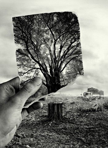 Seventy percent of Earth's land animals and plants live in forests, and many cannot survive the deforestation that destroys their homes.