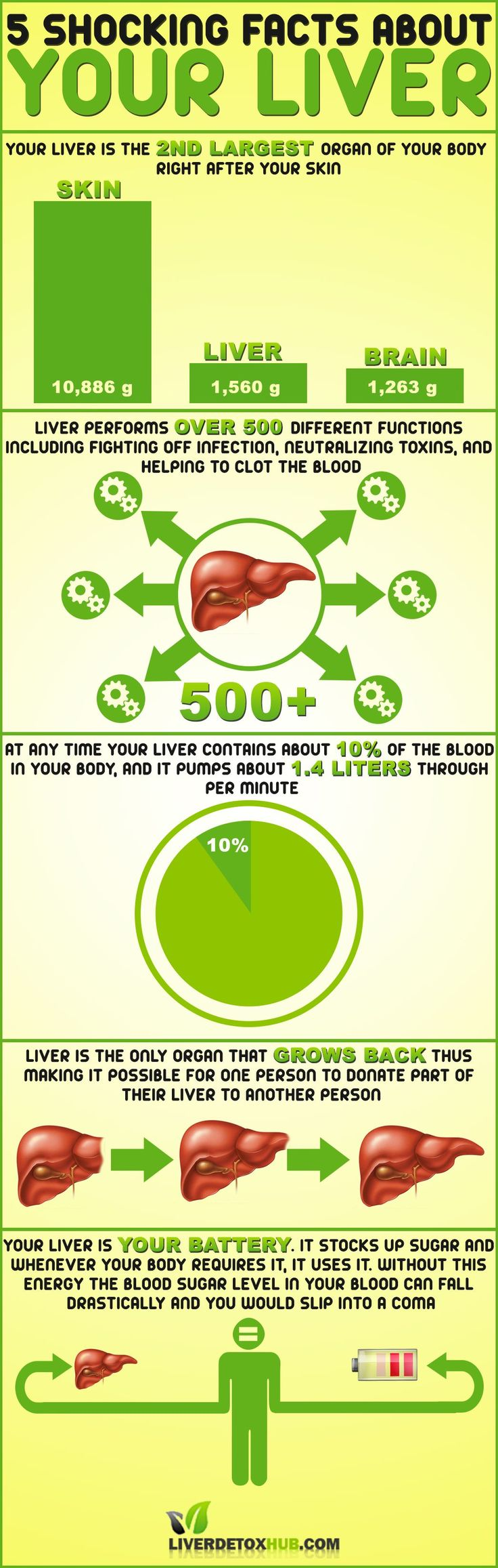 Did you know that liver is one of the most important organs in our body?  Why? Find out why in following liver infographic.