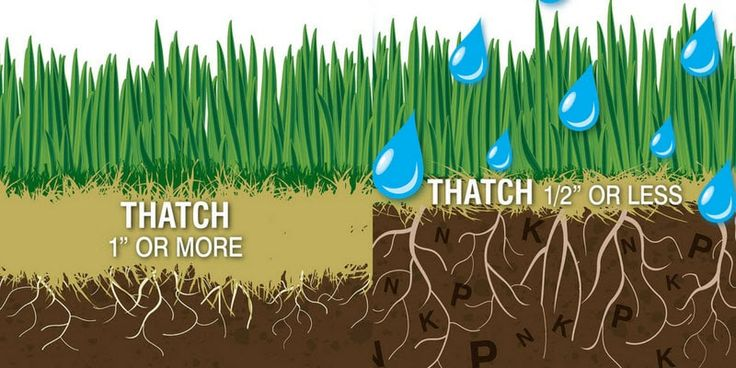 Benefits of dethatching and aerating your lawn