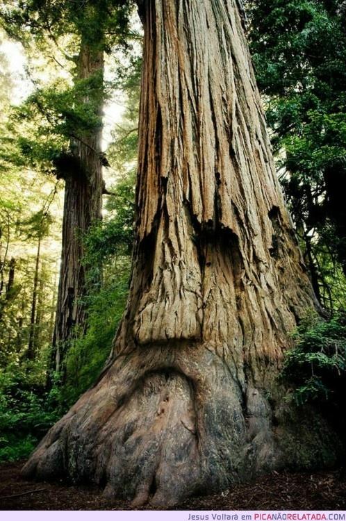 IT'S THE DEKU TREE!!!