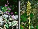 Orquídeas silvestres - Generalitat Valenciana