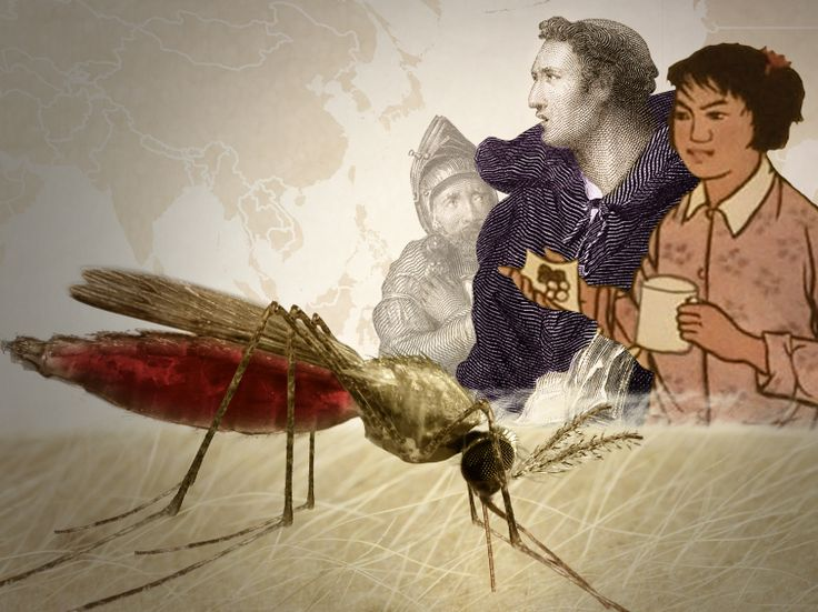 NPR's animation about the history of Malaria. Good use of historical images