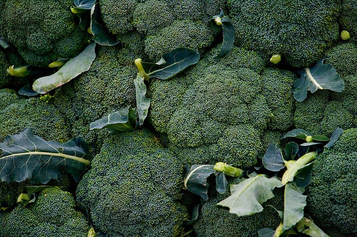 Learn how to plant, grow, and harvest broccoli plants with this garden guide.