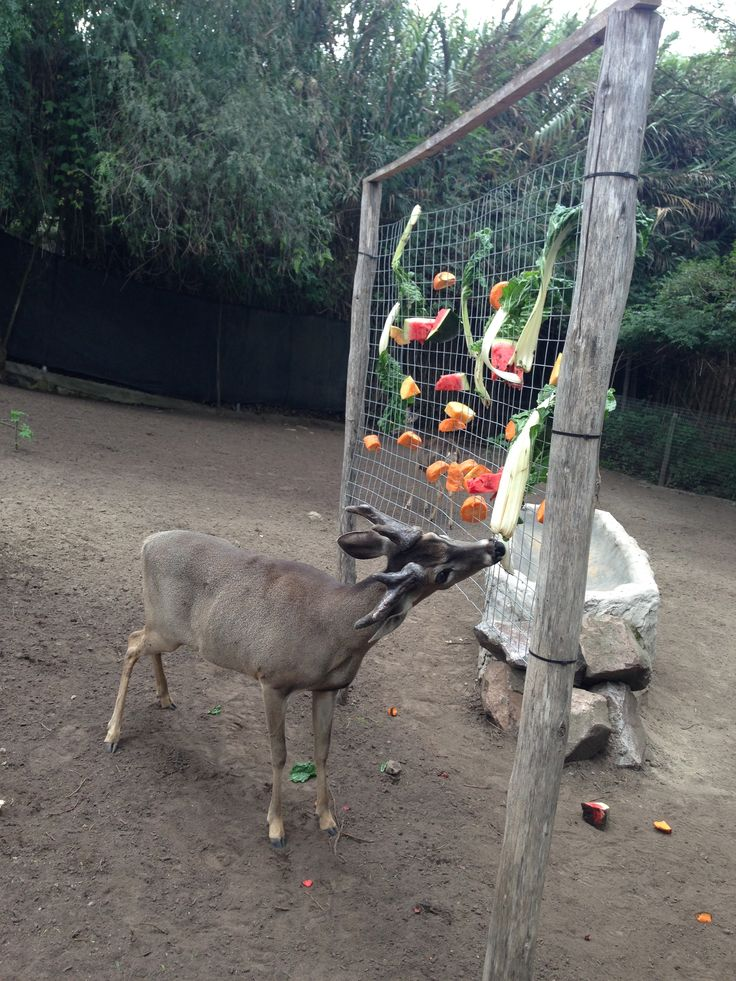 251 Best Images About Animal Enrichment On Pinterest