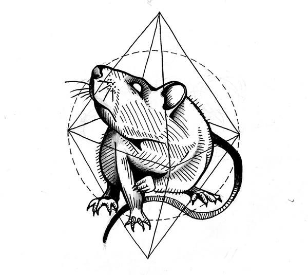 Rat.  Sketch. Tattoo project. by Evel Qubiak
