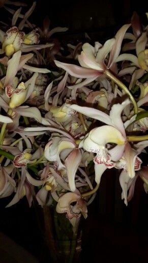 Beautiful Orchids .....Dads Garrden