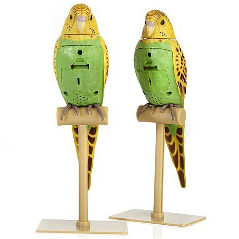 Jake and Hayden Perfect Polly Set of 2 Animated Birds