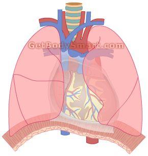 respiratory physiology tutorial Anzca first part tutorials respiratory physiology ii tutorial ii of iii- authorstream presentation.