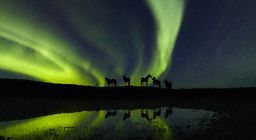 Horses beneath Northern   lights