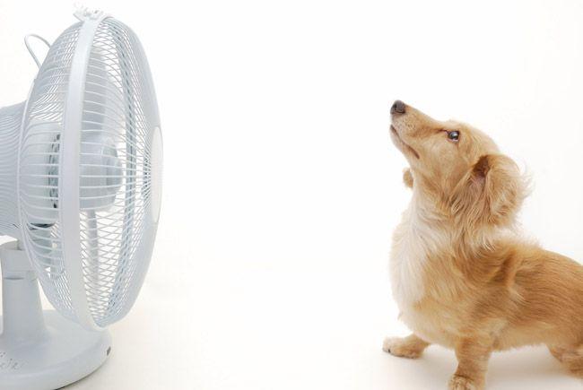 H παρέα του Επταπυργίου : Αποφεύγοντας τη θερμοπληξία Posted by trihes