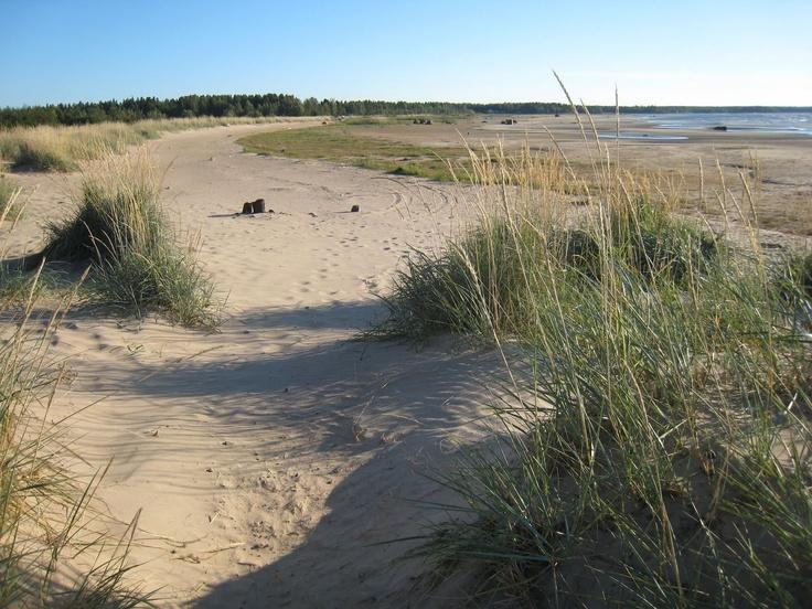 The sand dunes of Kalajoki, Central Ostrobothnian province. Finland