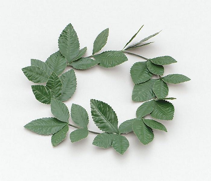 17 Best Images About Laurel Leaf Crown On Pinterest