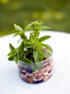 Cultivar hierbas aromáticas en casa es fácil. Clic en la imagen para leer el artículo.
