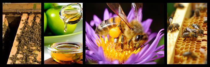 Beekeeping Supplies| Honey Bee Supplies | Bee Supply | PigeonMountainTrading.com